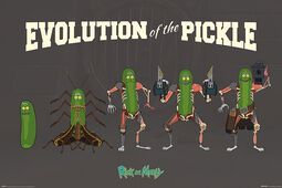Evolution of the Pickle